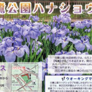 6月の花 その2 花ショウブ