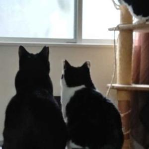 ネコと暮らすデメリット