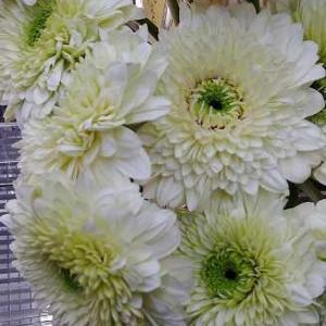 お花いっぱい