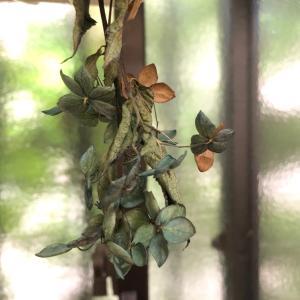 """""""さかさ紫陽花今日はナッツの日""""さかさ紫陽花♪ビックリの嬉しいシンクロ♡♪"""