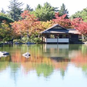 昭和記念公園 日本庭園 紅葉は