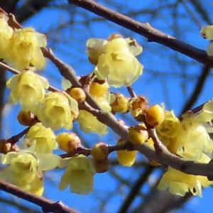 筑波植物園 今時の人気の植物