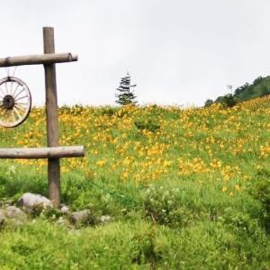 車山高原の草花と野鳥
