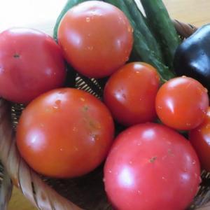 家庭菜園 胡瓜の苗・小玉スイカ・トマト・雑草作業など