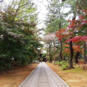 東禅寺のもみじがグラデーションして綺麗