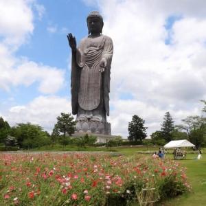 牛久大仏 世界最大120mの青銅製大仏