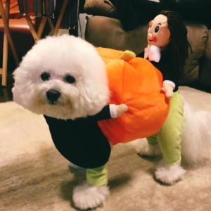 Happy HalloweenCozy but fun Halloween festi...