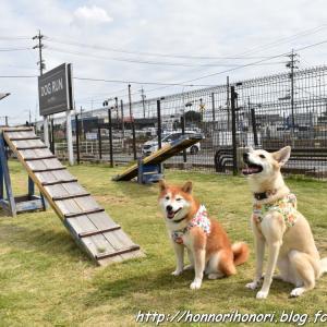 シャンプー前にひと遊び♪ - カインズ四日市店ドッグラン - vol.2
