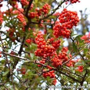 上野森林公園でお散歩♪ vol.2
