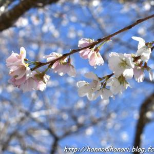 小原四季桜まつりへ♪ vol.2 - 川見四季桜の里・1 -