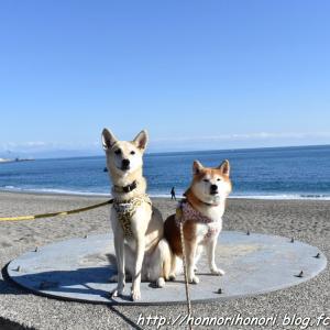 桂浜へ♪ vol.2 - 12月の帰省旅・17 -
