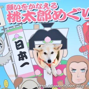 鴻ノ池SA(上り)ドッグランでひと遊び♪ vol.3 - 12月の帰省旅・29 -