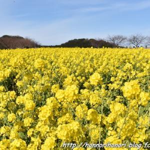 菜の花目当てに「花ひろば」へ♪ vol.1