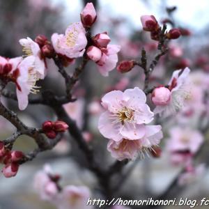 佐布里緑と花のふれあい公園で夕散歩♪ vol.2