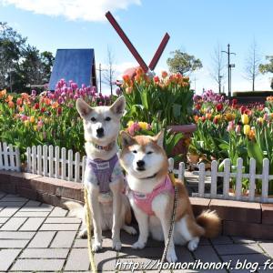 早春の木曽三川公園センター♪ vol.1