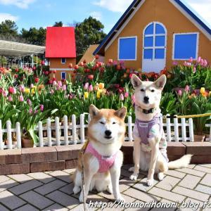早春の木曽三川公園センター♪ vol.4