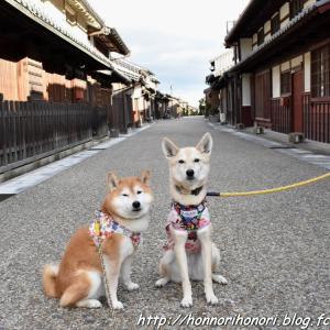 関宿でお散歩♪ vol.3
