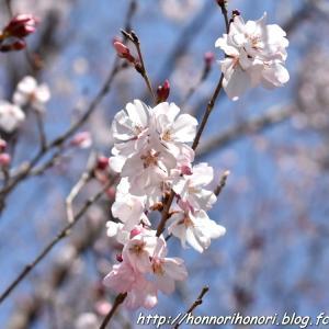 木曽川堤で桜散歩♪ vol.1