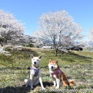 霞間ヶ渓で桜散歩♪ vol.2