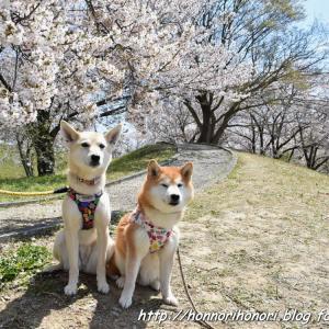 宮川堤で桜散歩♪ vol.4