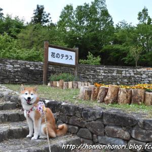 上野森林公園の花たち♪ vol.1