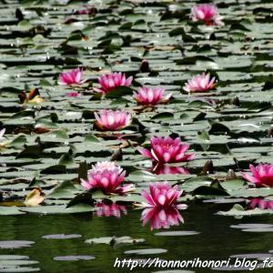 上野森林公園の花たち♪ vol.2