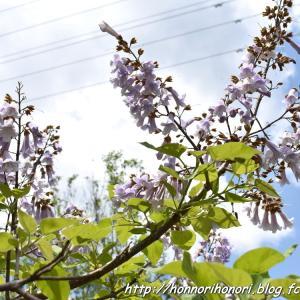 上野森林公園の花たち♪ vol.3