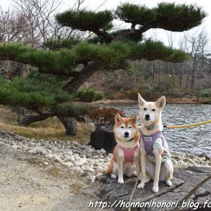 モリコロパークでお散歩♪ vol.2 - 日本庭園 -