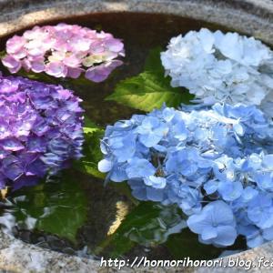 「かざはやの里」の紫陽花まつり2021♪ vol.1