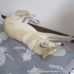 窮屈そうな寝姿。