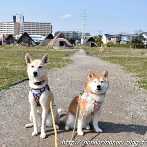 登呂遺跡へ♪ vol.3 - 静岡の旅・4 -