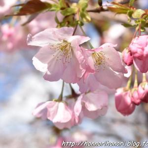 創造の森 横山へ♪ vol.6 - 桜園 -