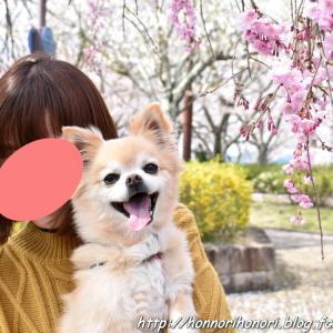 七谷川・和らぎの道で桜散歩♪ vol.1