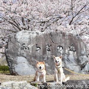 七谷川・和らぎの道で桜散歩♪ vol.4