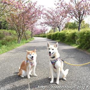 戸田川緑地でお散歩♪ vol.6