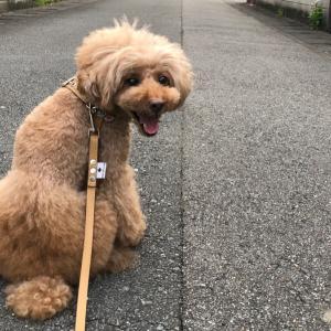 やっと行けたお散歩