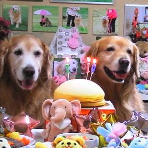 Happy Birthday !! Janne & Layla 2021 ♡
