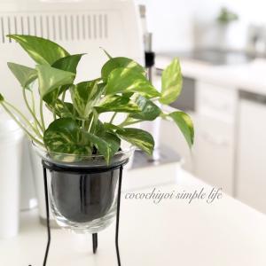 キッチンの清潔感あるインテリア♪観葉植物を選ぶコツ・飾るコツ♡