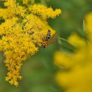 花が大好きなハチさん~ by むし倶楽部