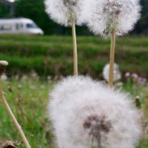 近鉄特急と草花