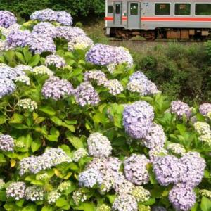 JR名松線とあじさい