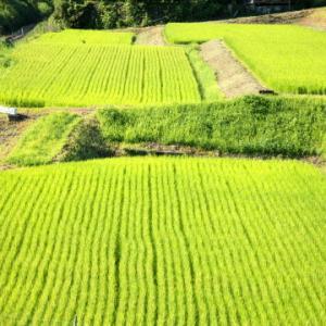 田園風景の名松線