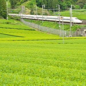 新幹線と茶畑