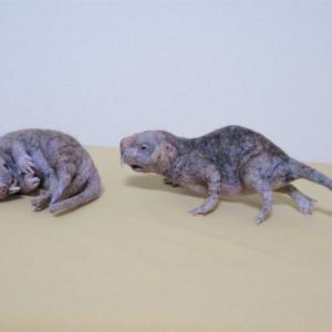 ハダカデバネズミ2匹