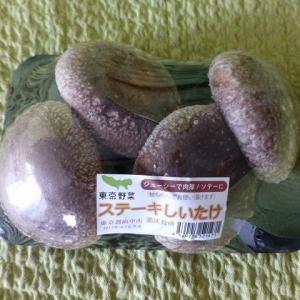 東京野菜「ステーキしいたけ」