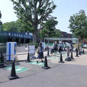 緊急事態宣言解除後、再開の上野動物園へ 200626