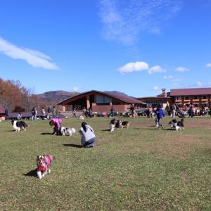 昭和記念公園の秋!