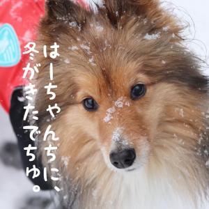 なごりの雪。。。