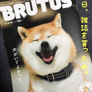 ブルータス買った。