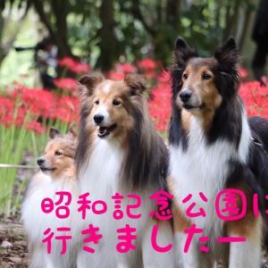 お義母さんと行く昭和記念公園〜秋のはじまり